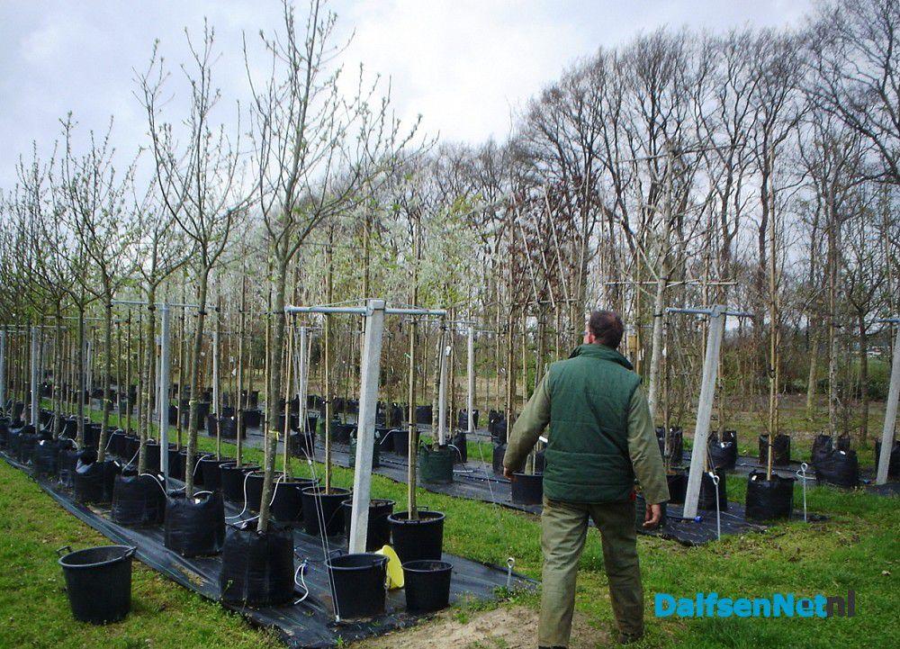 Planten En Bomen : Planten van struiken en bomen het kan nog net dalfsennet