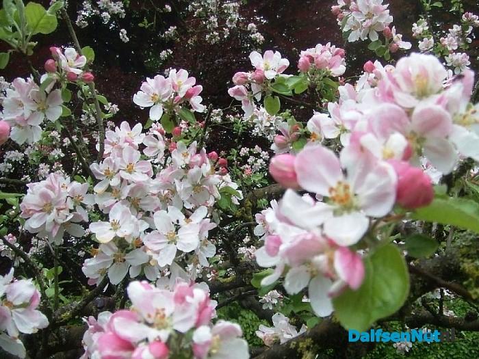 Het voorjaar komt er echt aan, ook al is het eind mei