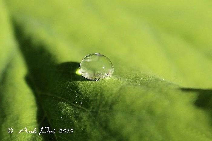 Foto van de maand Juni - Foto: Ank Pot