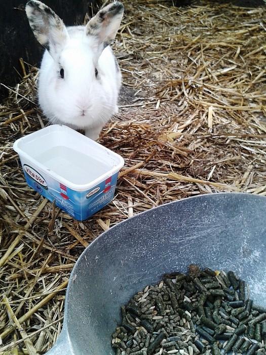 Wipkonijn aankomen lopen - Foto: eigen geleverde foto