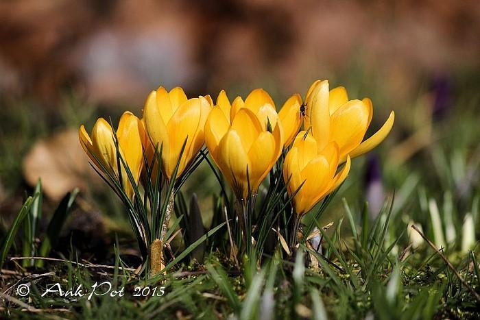 Foto van de maand Maart. - Foto: Ank Pot