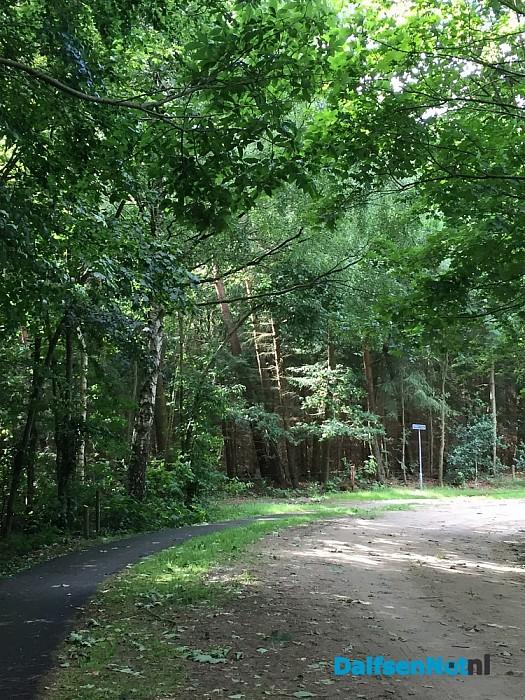Lange ladder gevonden in bos