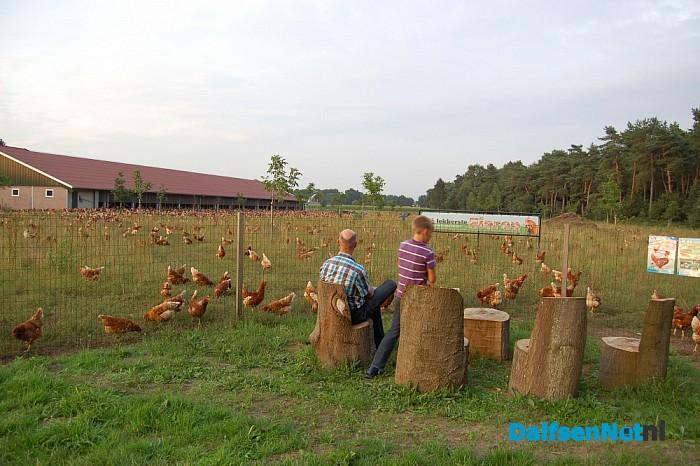 Kom kippen kijken - Foto: eigen geleverde foto