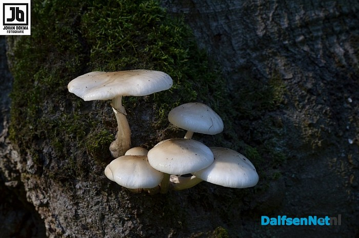 Zo mooi herfst paddenstoelen en zwammen - Foto: Johan Bokma