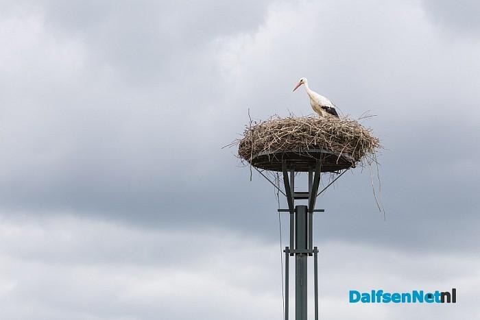 De ooievaar is al weer in Hoonhorst update