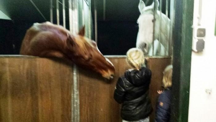 Rommelmarkt en paarden knuffelen - Foto: eigen geleverde foto