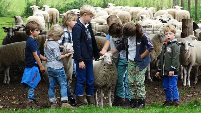 Op Stap met de schaapherder op de Lemelerberg - Foto: eigen geleverde foto