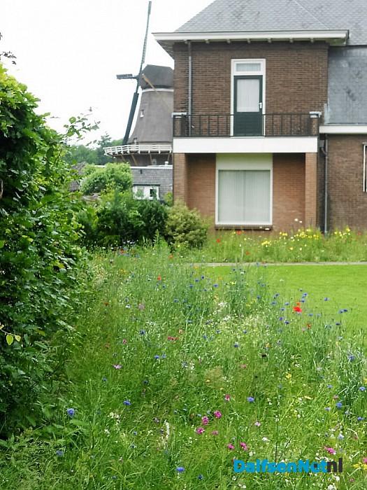 Dorpshuiskamer kijkt uit op bloemenparadijs