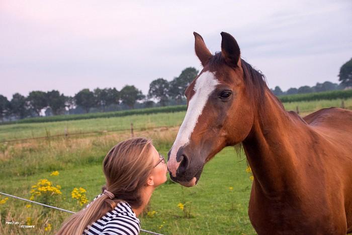 Rommelmarkt en paarden knuffelen, het kan weer - Foto: eigen geleverde foto