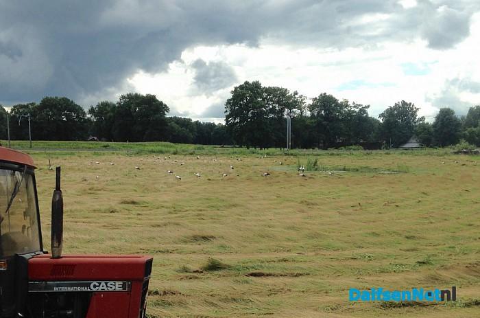 Grote groep ooievaars (50) - Foto: Ingezonden foto