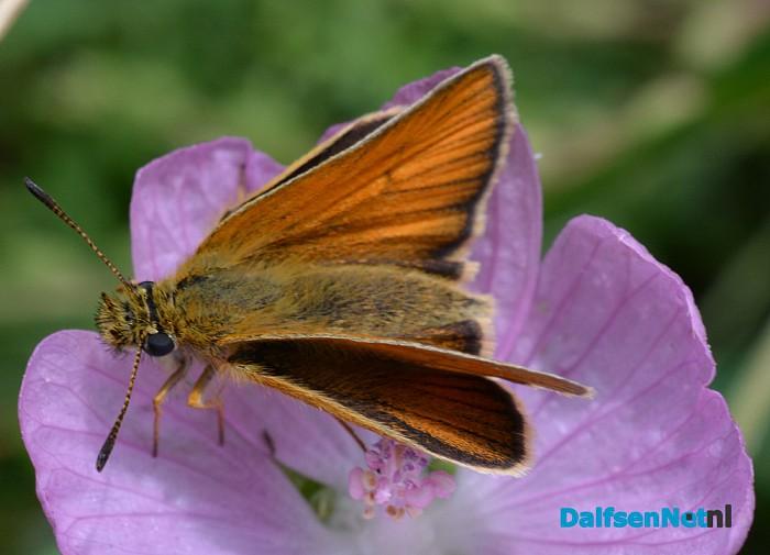 Talrijke insecten op Natuurboerderij Lindehoeve - Foto: Ingezonden foto