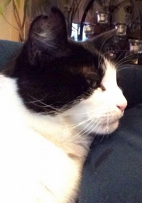 Kat weggelopen - Foto: eigen geleverde foto