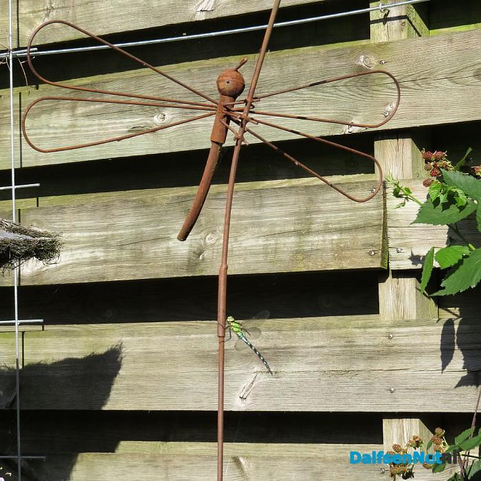 Libelle meets libelle - Foto: Ingezonden foto