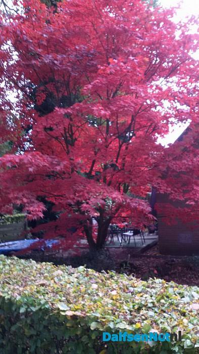 Bloeiende boom in de herfst. - Foto: Ingezonden foto