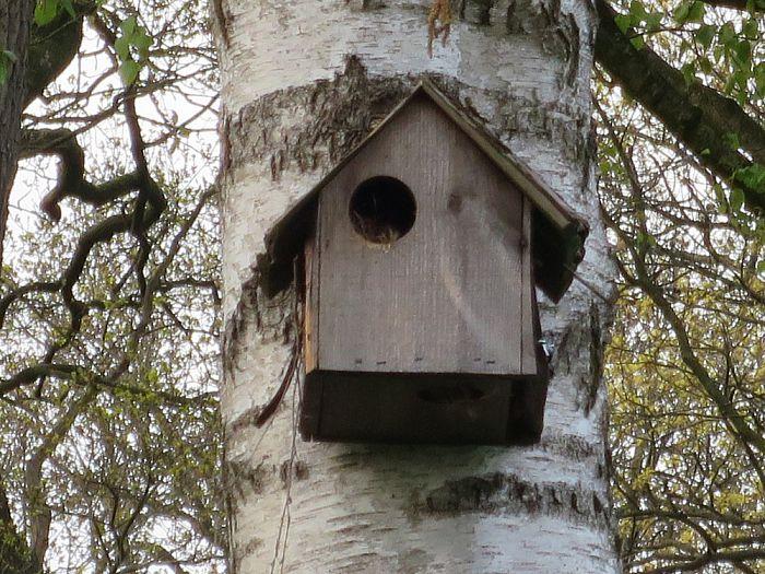Jonge eekhoorns in een tuin te Hoonhorst - Foto: eigen geleverde foto