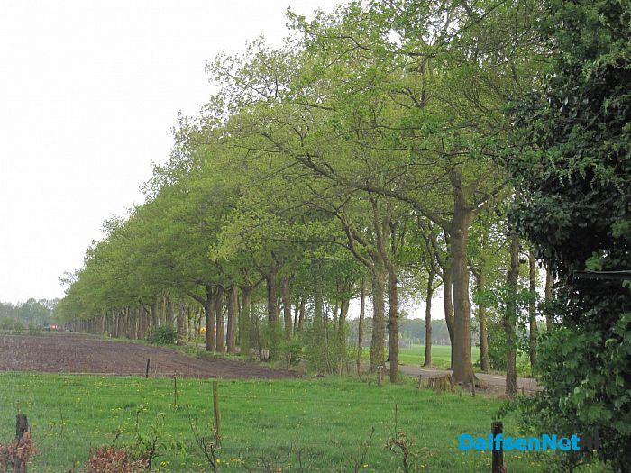Behoud bomen Jagtlusterallee - Foto: Ingezonden foto