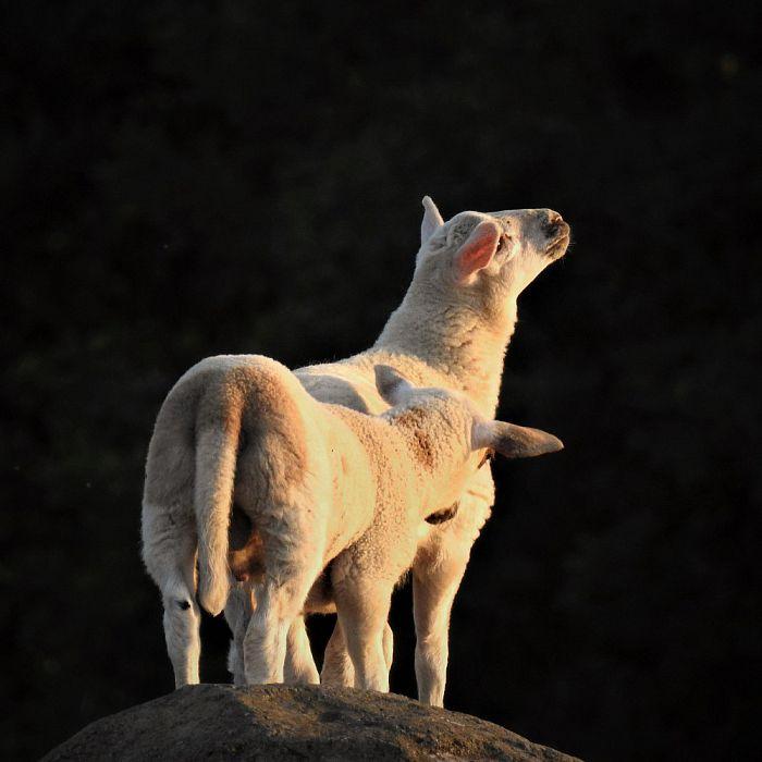 Lichtlam op de Zwevende kei en meer - Foto: eigen geleverde foto