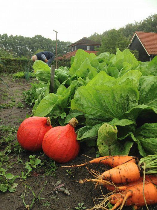 """Natuurboerderij oogst ook """"vergeten groente"""" - Foto: eigen geleverde foto"""