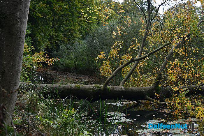 Op Landgoed De Horte is het nu genieten van de herfst - Foto: Johan Bokma