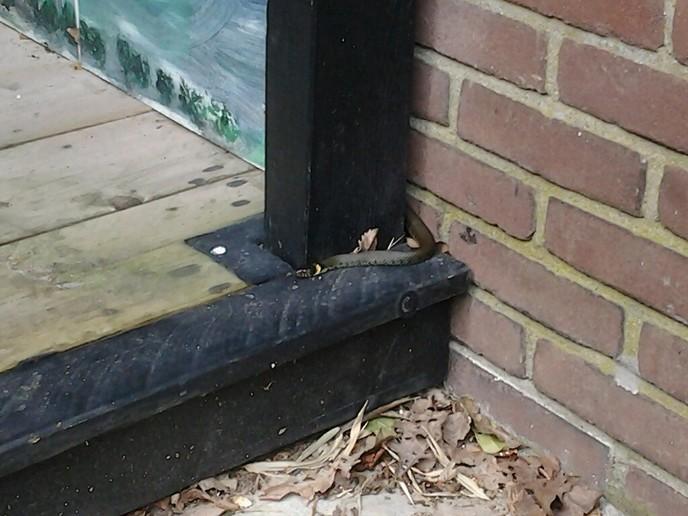 Zie ik opeens een slang in mijn tuinhuis - Foto: eigen geleverde foto