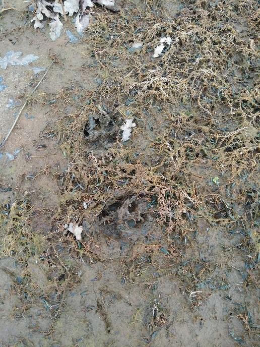 Voetafdrukken dier - Foto: eigen geleverde foto