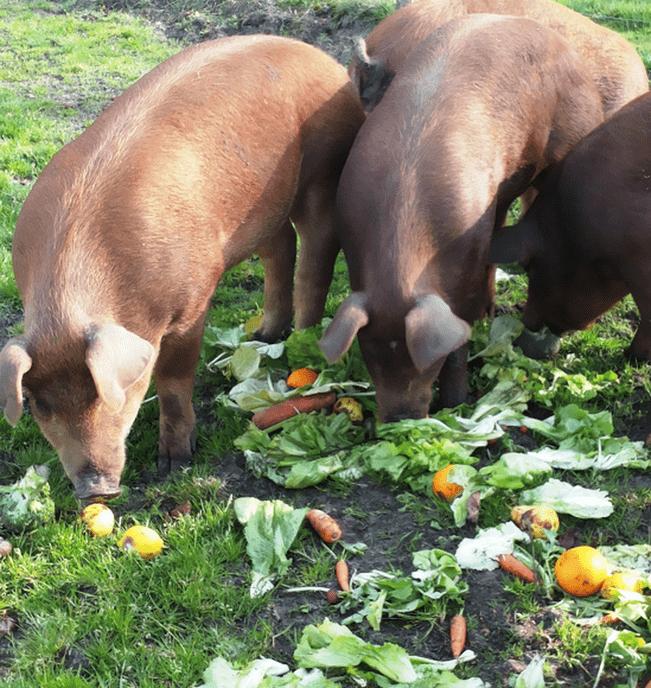 Eet elke dag genoeg groente en fruit - Foto: eigen geleverde foto