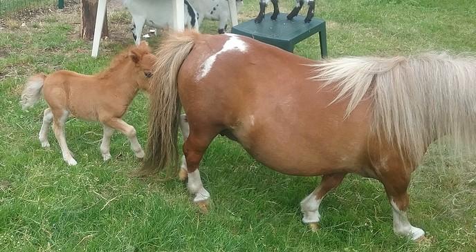 Veel belangstelling voor ini miny pony - Foto: eigen geleverde foto