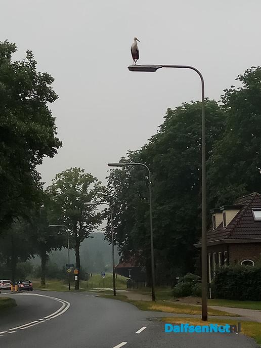 Ooievaar gespot op een lantaarnpaal - Foto: Ingezonden foto