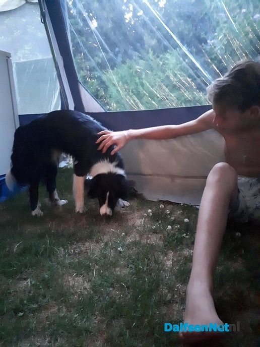 Hond gevonden - Foto: Ingezonden foto