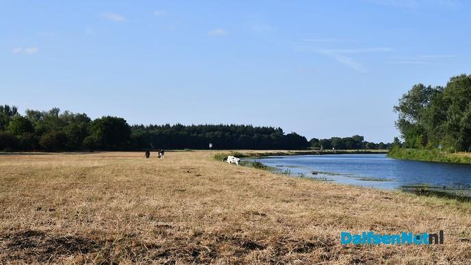 Het gras is op, dus staan de koeien op winterrantsoen - Foto: Johan Bokma