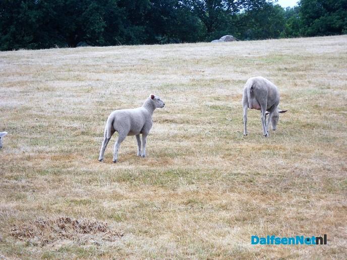 Niet alleen de schapen zijn geschoren