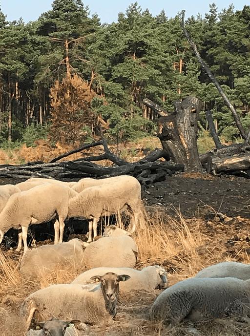 Nieuws van de boswachter: Wie de kudde nog wil zien moet snel zijn - Foto: eigen geleverde foto