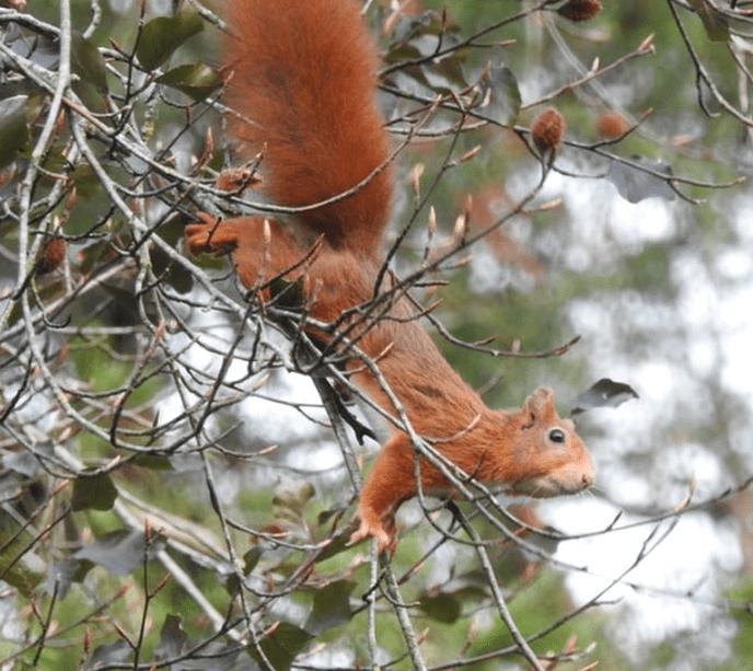 Eekhoorns:album de Stuwe - Foto: eigen geleverde foto