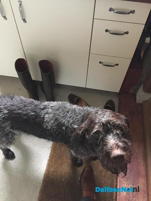 Gevonden : hond (zie foto) en weer op de plek. - Foto: Ingezonden foto