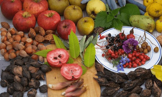 Oriëntatiecursus voedselbos voor startende initiatieven - Foto: eigen geleverde foto