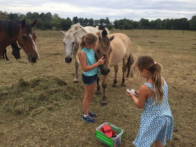 Paarden knuffelen en tevens snuffelen - Foto: eigen geleverde foto