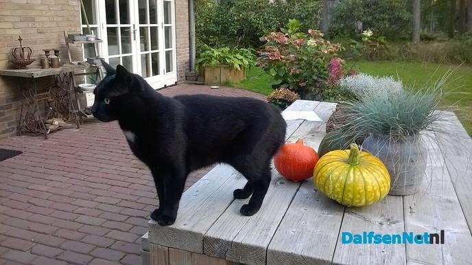 Zwarte kat - Foto: Ingezonden foto