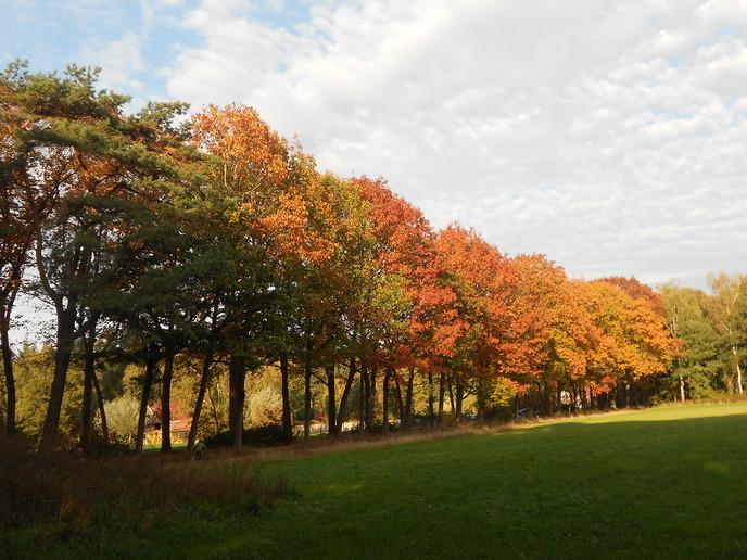 Herfst in kleuren