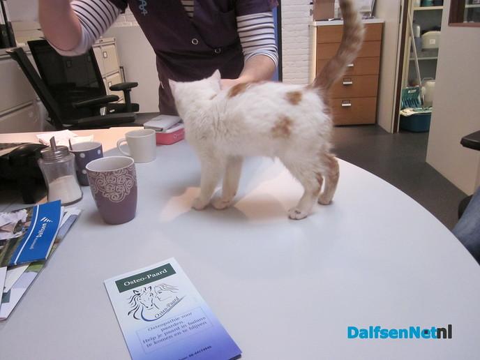 Gevonden kittens - Foto: Ingezonden foto