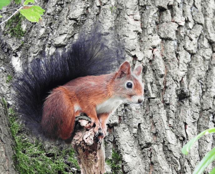 Dankzij uw gift, leven deze eekhoorns - Foto: eigen geleverde foto