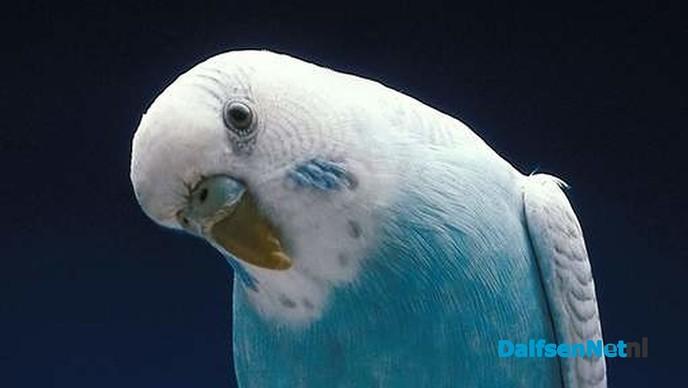 """De Vogelvriend kiest  """"Dalfsens Mooiste"""" - Foto: Ingezonden foto"""