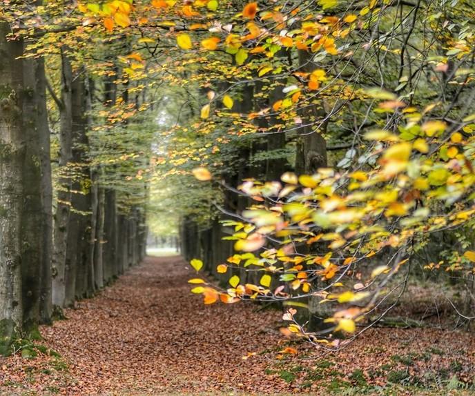 Een herfstfoto - Foto: eigen geleverde foto