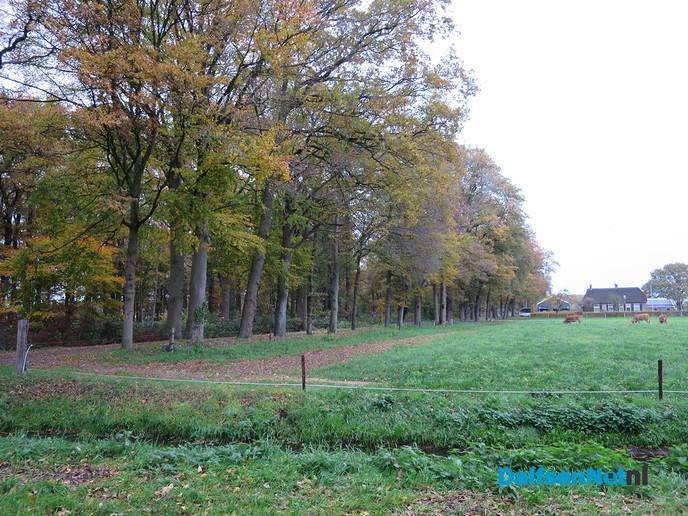 Herfst… De blaadjes regenen naar beneden - Foto: Wim