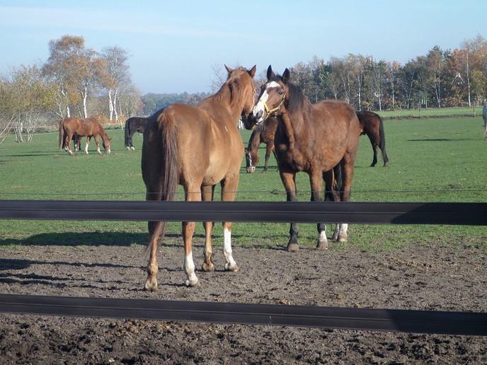 Paarden knuffelen en tevens snuffelen, nog 1 keer dit jaar - Foto: eigen geleverde foto