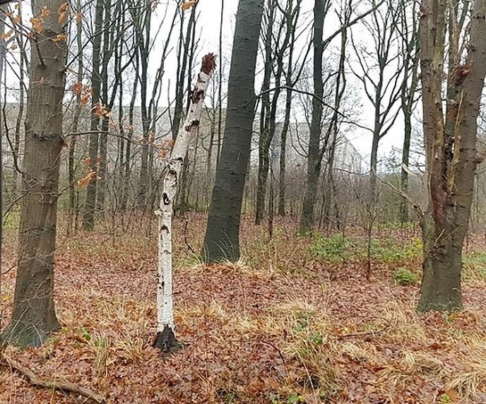 Wat zit daar in het bos? - Foto: Gruune Jopie