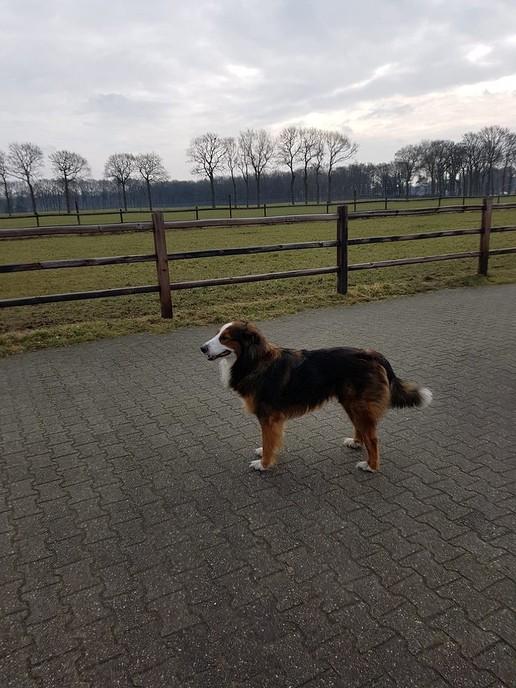 Hond vermist Oudleusen - Foto: eigen geleverde foto