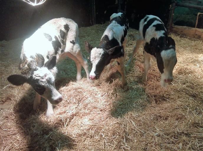 Weer een drieling in Dalfsen geboren - Foto: eigen geleverde foto
