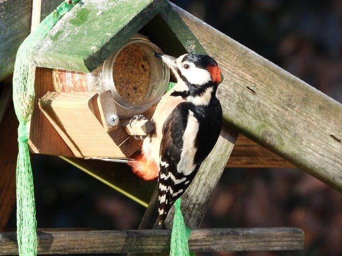 Vogels genieten van het bijvoederen - Foto: eigen geleverde foto