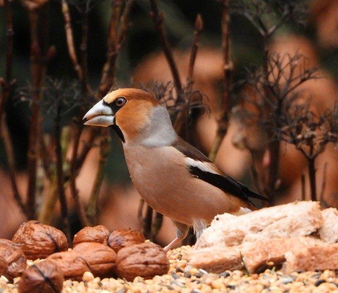 Vogeltelling - Foto: eigen geleverde foto