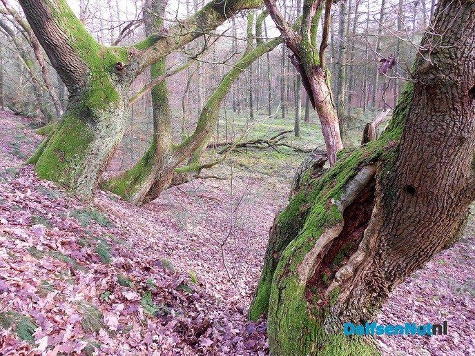 Het bos op Rechteren is mooi